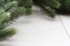 Christmas background with fir Stock Images