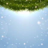 Christmas background with fir branches. Fir branches on blue background Stock Images