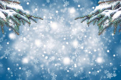 Christmas background with fir branches and snow Royalty Free Stock Photography