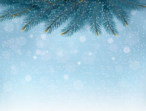 Christmas background with fir branches. Stock Photos