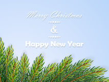 Christmas background with fir branches. Vector illustration Stock Photography