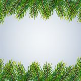 Christmas background with fir branches. Vector illustration Royalty Free Stock Image
