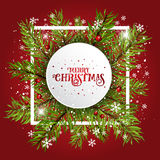Christmas background with fir tree branches and berries Stock Photos