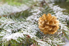 Christmas background with fir tree and cone Royalty Free Stock Image