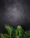Christmas Background with  Fir Tree on Vintage Black board with Royalty Free Stock Photos