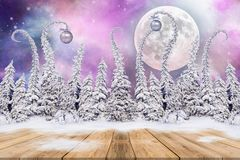 Christmas background with fir trees and night sky Stock Images