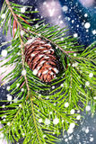 Christmas background with  firtree  on wood with  snow Royalty Free Stock Image
