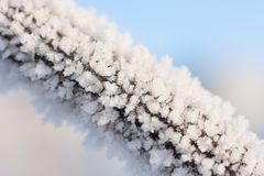 Christmas background with frosty pine tree Royalty Free Stock Image