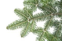 Free Christmas Background Green Fir Branch Texture Royalty Free Stock Images - 3763179