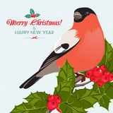 Christmas background and greeting card with bullfinch and holly Royalty Free Stock Photo