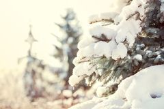 Christmas background. New Year tree under the snow on the street royalty free stock image