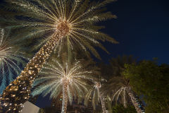Christmas background palm tree Stock Images