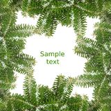 Christmas background with pine branch Royalty Free Stock Image