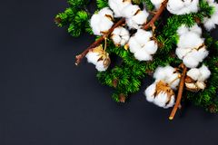 Christmas background with pine branches and cotton Space for text royalty free stock photo