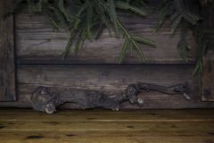 Christmas Background With Pine Branches and Wood logs On a Rusti Royalty Free Stock Photos