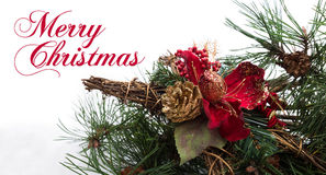 Christmas background with pine tree branch, pine cones, red flower in snow Stock Images