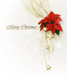 Christmas background with  Poinsettia Stock Photo