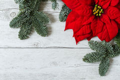 Christmas background with Poinsettia and fir tree branches. Christmas background with Poinsettia flower and fir tree branches on traditional white wood stock photos