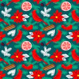 Christmas background with poinsettia red flower. Winter floral s. Eamless pattern with cardinal bird, grapefruit, canella, pine tree branches. Seasonal design Royalty Free Stock Photography