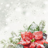 Christmas background with poinsettia on snow, text space Stock Photos