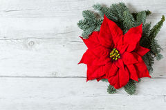 Christmas background with Poinsettia star flower. Red Christmas star flower Poinsettia and fir tree branches on traditional white wood background stock images