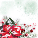 Christmas background with poinsettia, text space Royalty Free Stock Photos