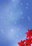 Christmas background with poinsettias stock image