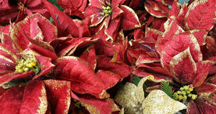 Christmas Background Poinsettias Green Red Glitter Stock Image