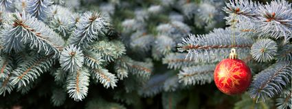 Christmas ball and blue Pine branches with snowfall. Royalty Free Stock Photography