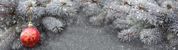 Christmas ball and blue Pine branches with snowfall. Royalty Free Stock Photo