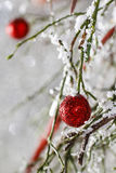 Christmas background: red balls, christmas tree, snow Royalty Free Stock Image