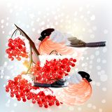 Christmas background with snow, bird and rowan in retro style Royalty Free Stock Photo