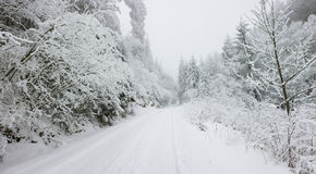 Christmas background snow covered road. With snowy fir trees Royalty Free Stock Image