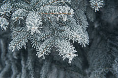 Christmas background of snow-covered trees Stock Images