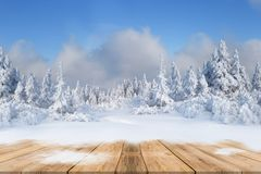 Christmas background with snowed fir trees Royalty Free Stock Image