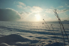 Christmas background snowy field in winter Royalty Free Stock Photos