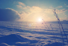 Christmas background snowy field in winter Stock Images