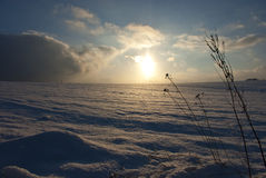 Christmas background snowy field in winter Stock Image