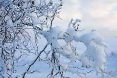 Christmas background snowy field in winter Royalty Free Stock Images