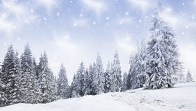 Christmas background Royalty Free Stock Photo