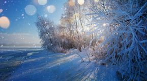 Christmas background with snowy fir trees. Art Christmas background with snowy fir trees royalty free stock images