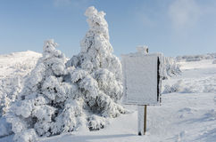 Christmas background with snowy fir trees.Korea Royalty Free Stock Photography