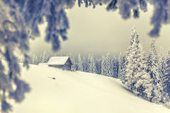 Christmas background with snowy fir trees. Royalty Free Stock Image