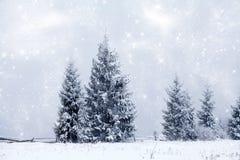 Christmas background with snowy fir trees Stock Photos