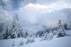 Christmas background with snowy fir trees Stock Photography