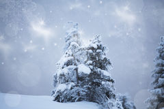 Christmas background with snowy fir trees Royalty Free Stock Photos