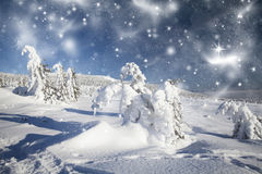 Christmas background with snowy fir trees Royalty Free Stock Image