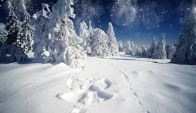 Christmas background with snowy fir trees Stock Photo