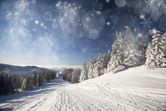 Christmas background with snowy fir trees Stock Photos