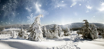 Christmas background with snowy fir trees Royalty Free Stock Photography